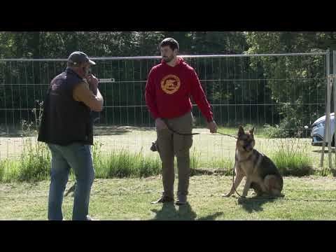 Centre Herv Pupier - Formation Educateur canin. Chiens Difficiles