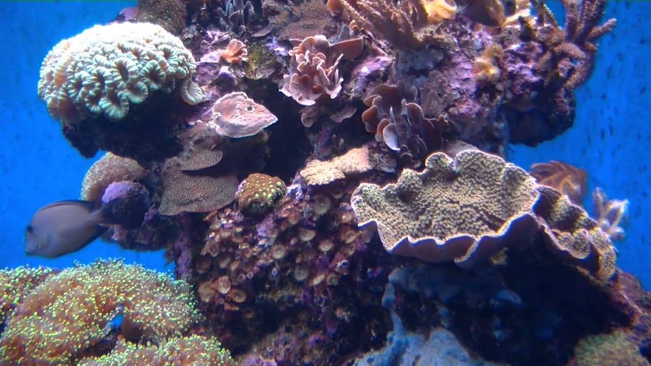 Palma aquarium mallorca youtube - Hotelbeds palma de mallorca ...