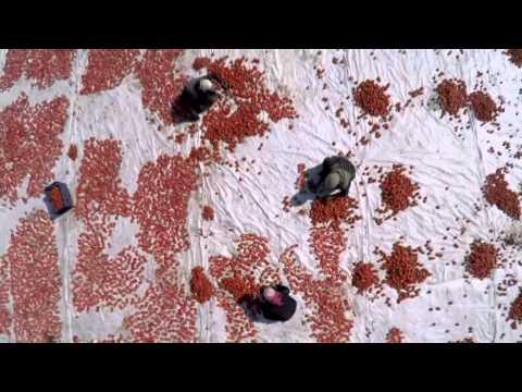 Sun dried tomatoes in Turkey's Manisa