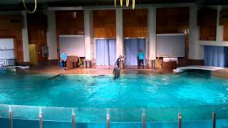 Dolphin Show @ Tampere, Finland