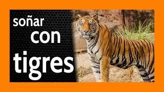 Soñar con Tigres 🐯 Menuda ***Presencia*** 🐅