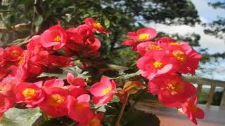 Stunning Blooming Flowers & Relax Music #002 @ flower dance