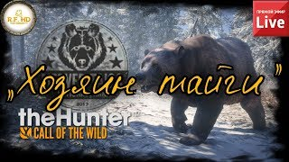 ХОЗЯИН ТАЙГИ. The Hunter: Call of the Wild. Прохождение на русском. СТРИМ #2.
