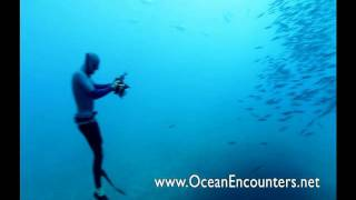 Freediving with Great White Sharks - Ocean Encounters
