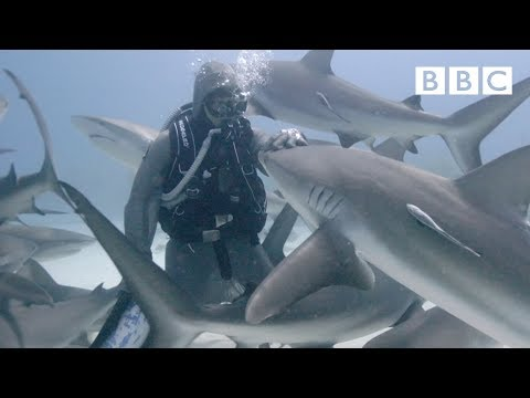 The woman who swims with sharks - BBC