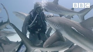 The woman who hugs sharks - BBC