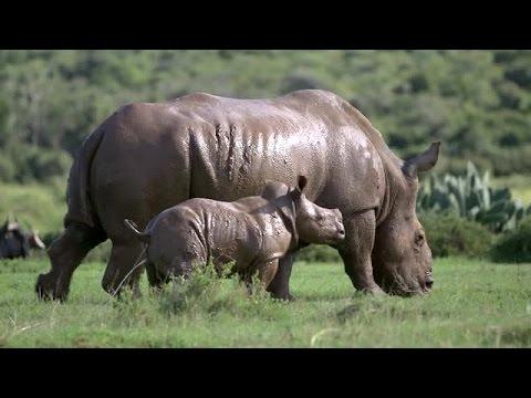 Frivilligt arbejde med dyr - Hands on Big 5 - South Africa