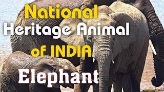 National Heritage Animal of INDIA || Elephant || हाथी 🐘