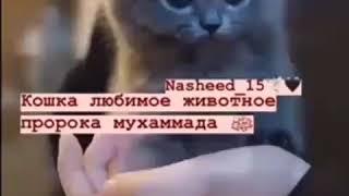 Любимое животное мухаммада это кошка