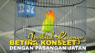 Download lagu BETINA KONSLET DENGAN PASANGAN JANTAN - LOVEBIRD KENONGO @ Pandora cup 3 wonosobo