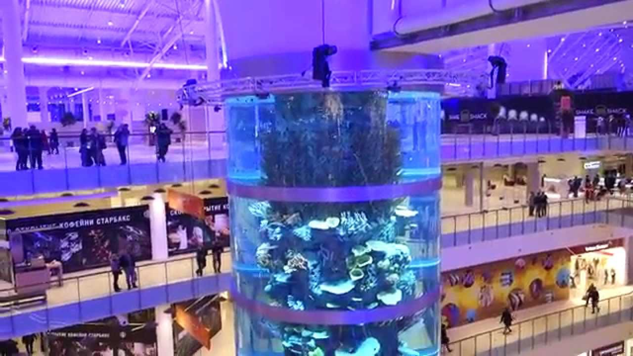 17 апр 2017. Более ста аквариумов по всей стране принесли проекту «море желаний» в. Ребенка заинтересовали рыбки, и она стала просить купить аквариум. В 2012 году он перебрался в москву и открыл небольшой.
