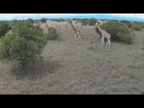 Ol Pejeta From Above - On Safari With a DJI Phantom Quadcopter