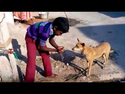 Snehalaya for Animals - Coimbatore