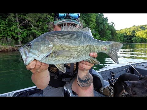 Fishing For EARLY Summer SMALLMOUTH At Dale Hollow!