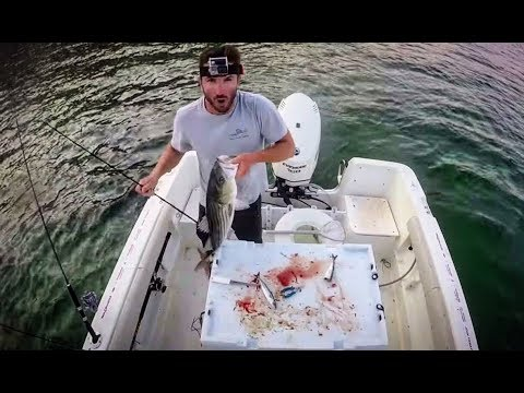 Cape Cod Striper Fishing Tutorial: How To Chum & Live-line Mackerel