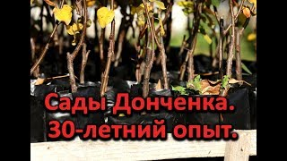 Как выглядит профессиональный сад? Сады Донченка - 30-летний опыт!
