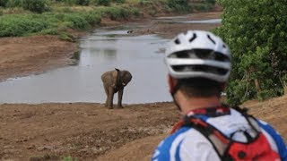 Cycle safari: getting up close and personal with lions in lycra