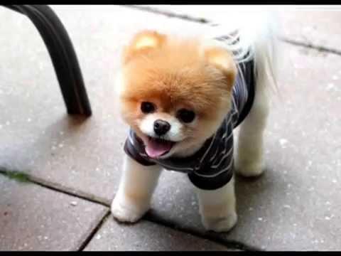 Продажа собак донецк. В сервисе объявлений olx. Ua донецк можно быстро и недорого купить щенка. Заведи преданного породистого друга прямо.