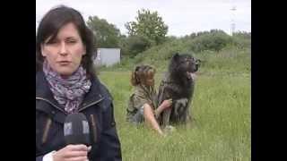 В Череповце все чаще сдают в приют породистых собак