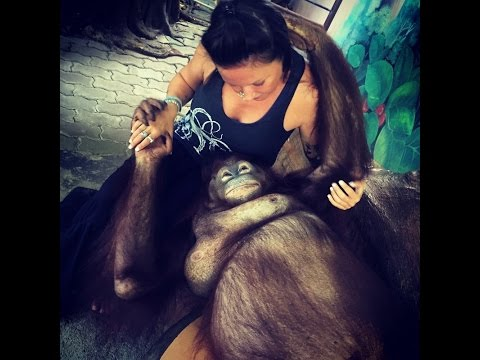 Milo, Phuket Zoo, Nong DJ update, new over-stay penalties