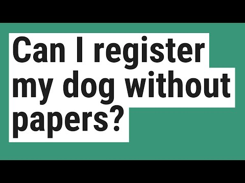 Can I Register My Dog Without Papers?