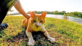 公園で猫が何か言いながらモフられにきた