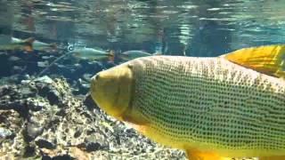 видео Аруба-скуба-дайвинг