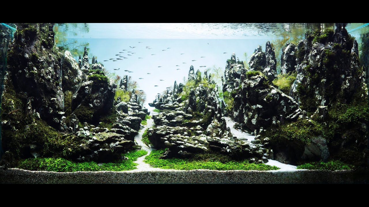 Beautiful Aquascape The Art Of The Planted Aquarium Encrest 90sec Youtube