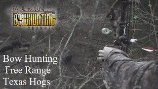 Bow hunting Free Range Hog in Texas how we hunted pigs during archery season in the south
