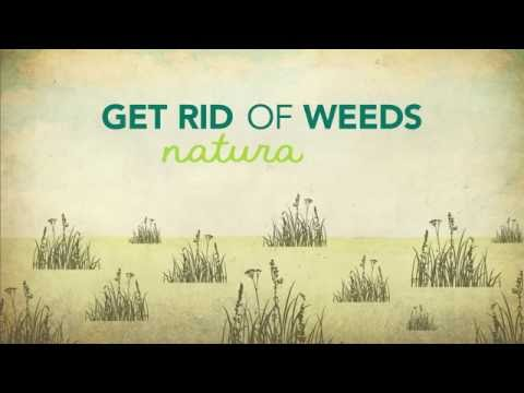 How to Kill Weeds Naturally - YouTube