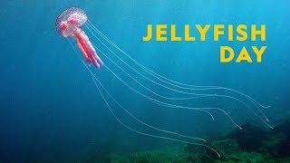 National Geographic Jellyfish Day Square