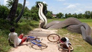 Terrifying! Brave Brothers Catch Big Snake while going to school - Catch Snake Big On The Road