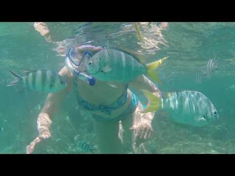 Seychelles snorkelling
