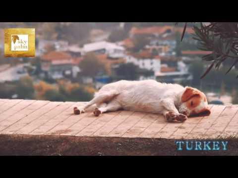 """TURKEY  """" Skypalm Travel & Tours"""""""