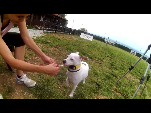 Σκύλος Dog Agility  & Drive unlimited | Feeders Strs ep 3