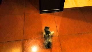 Котенок занос на мокром полу