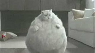Fat Cat Dancing To Very Random Music