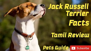Jack Russell Terrier | Jack Russel | Facts | All about JRT | Pets Guide | Information | Tamil Review