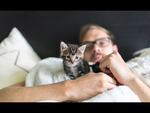 Andrew, the Kitten Dad!
