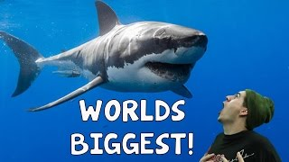 WORLDS BIGGEST SHARK! - CAUGHT ON TAPE!