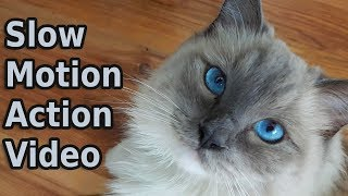 Slow Motion Action Video | Bowie The Ragdoll Cat