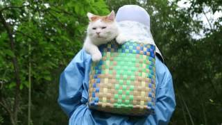 http://kagonekoshiro.blog86.fc2.com/blog-entry-13262.html のせ猫オ...