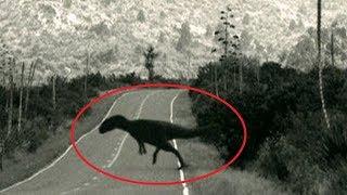 5 Lần Khủng Long Xuất Hiện Vô Tình Được Camera Quay lại || (5 Dinosaurs Caught on Camera)