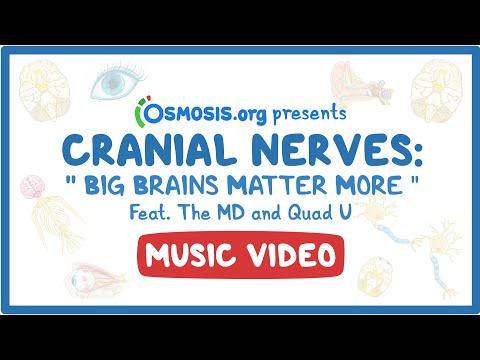 Cranial Nerves Music Video: Big Brains Matter More