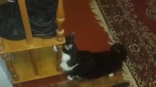 Моему коту плохо!!!
