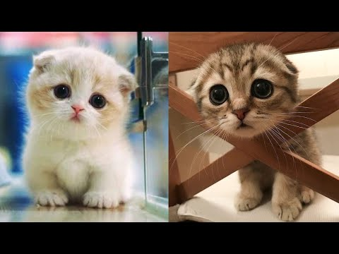 Baby Cats  Cute and Funny Cat Videos Compilation #8 | Aww Animals