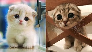 Baby Cats - Cute And Funny Cat Videos Compilation 8  Aww Animals