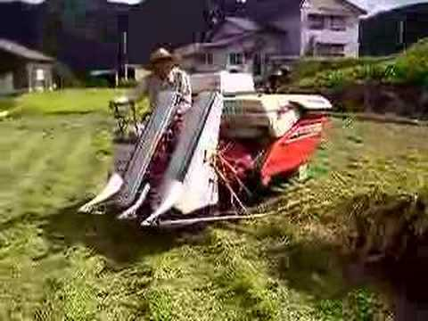 Rice Cultivation/収穫