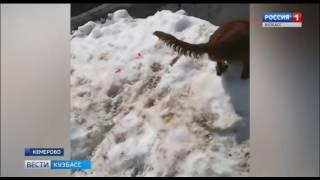 В Кемерове собака нашла снег