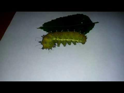 Класс насекомые О сайте bono esseru